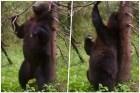 oso baile sexy El baile sexy de un oso que nos hizo reír en 2016