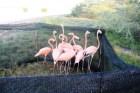 flamencos Incautan flamencos y cuervos en un negocio RD