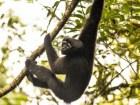 mono Nueva especie de mono llamada 'Luke Skywalker'