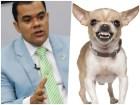 diputado-perro