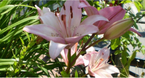 flores mexicanas Date una jartura de estas flores