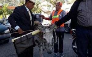 burros peregrinos Incautan burros a peregrinos iban pal Palacio