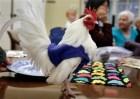 pollo Foto – Abrigos pa pollos (Queseto!)