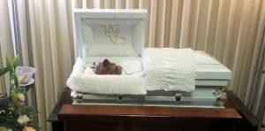 perro8 300x148 Multan tipo por velar perro en funeraria [PR]