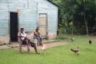 fotos, campo, animales mascotas (26)
