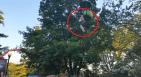 NY 300x164 Menor se cae de juego mecánico en un parque de NY (video)
