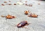 cucarachas 150x102 Invasión de cucarachas en vecindario de Filadelfia