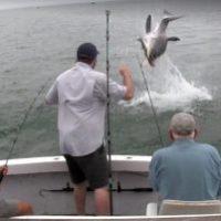Video - Gran tiburón blanco sorprende a unos pescadores