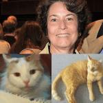gatos 150x150 Doña deja herencia de US$300 mil a sus gatos