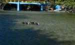 rio los patos 150x90