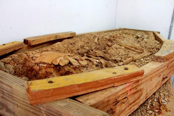 IMG 8230 Descubren un lote de piezas taínas y africanas en Cotuí