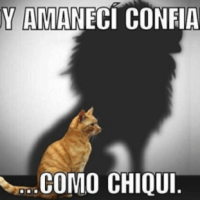 Memes de ¡Ay Chiqui!