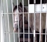 Caballo preso Brasil 200x177 Meten preso a un caballo por darle una patá a un carro