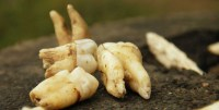 dientes 200x101 Vainas de no cepillarse nunca