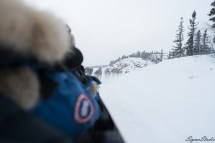 在行进过程中拍的狗队,驾驶雪橇的人会偶尔叫唤避免狗狗在拉橇过程中出现开小差的情况。