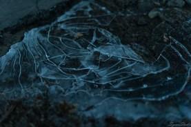 这几天天气冷的要死,路边水坑已经结上了冰。