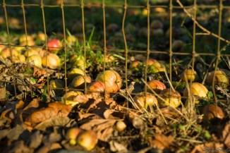 满地的苹果