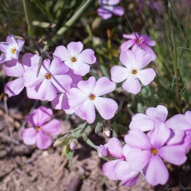 山顶上的野花