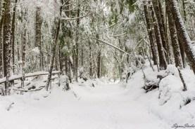 离开公路后,雪又恢复到脚腕高度,行动能力迅速增加。只是树上的积雪不时的滑落,一不小心被击中的话还是很悲惨的。
