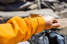 蝴蝶一只。大概是这件 soft shell 比较耀眼,这只蝴蝶老是绕着我飞。