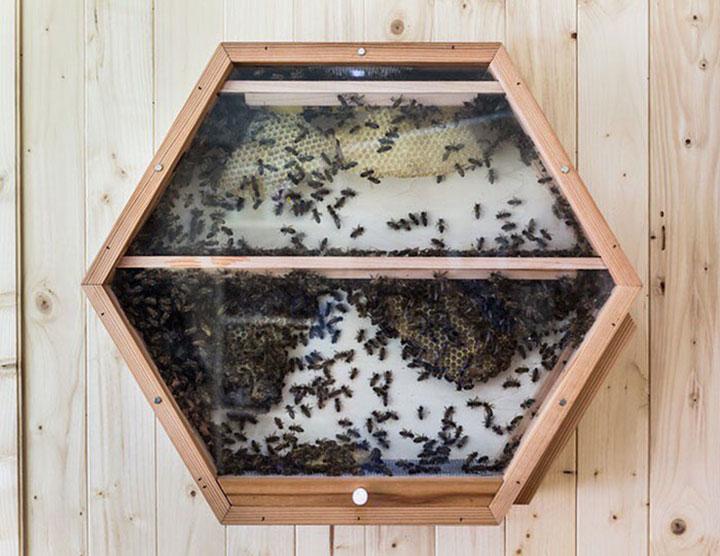 abejas caseras