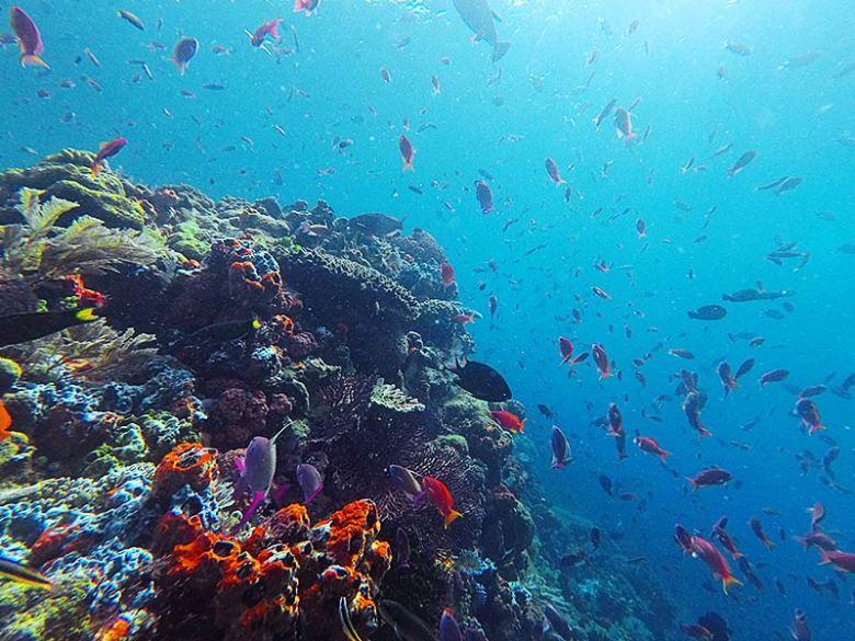 Komodo snorkeling underwater at batu balong island