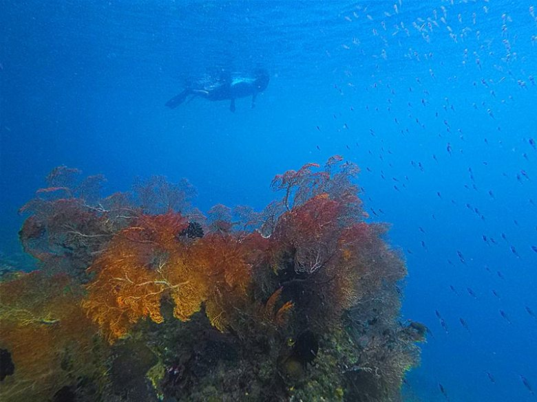 Things to do snorkelling at Friwen Wall, Raja Ampat