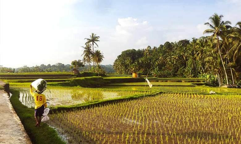 Hidden Rice Fields of Wistata Alam