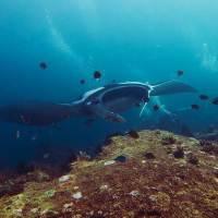 Best Dive Sites in Raja Ampat