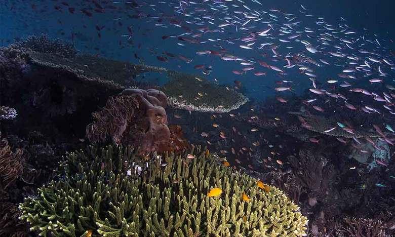 Diving Otdima in raja ampat