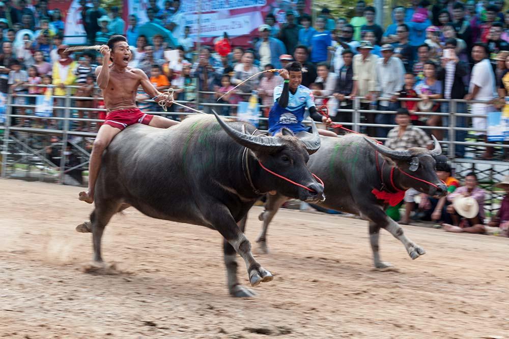 Buffalo 61 - HOLY COW: A Day at Chuhonburi Buffalo Races