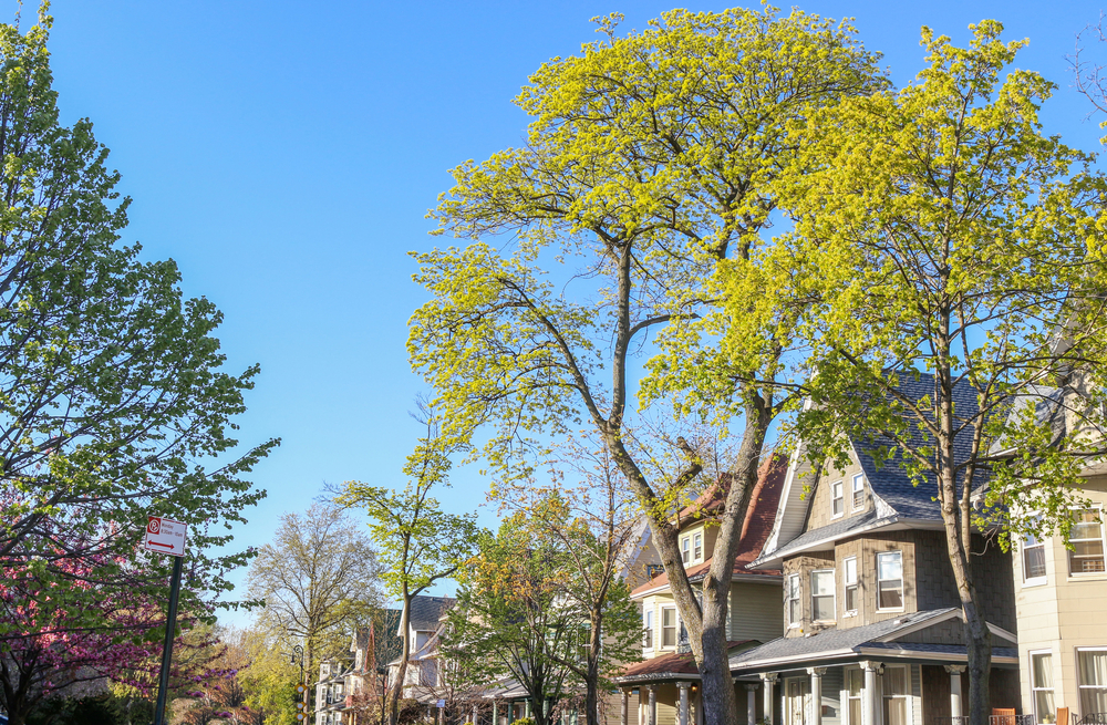 Ditmas Park, Brooklyn: What it's like to actually live there