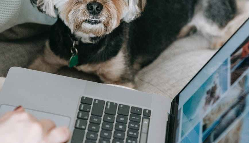 cute dog sitting on sofa near crop anonymous owner using netbook
