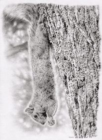 Dangling Squirrel