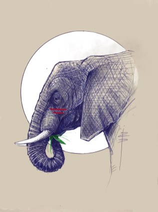 procreate-Elephant01