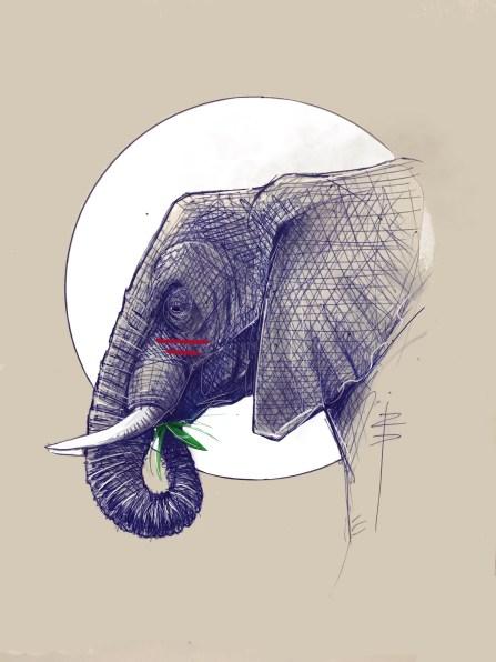 procreate-Elephant01