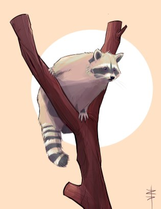 procreate-raccoon