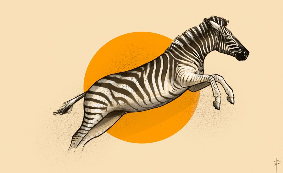 procreate-zebre