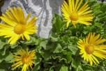 Danke für die Blüemli! Gelb ist eine unserer Lieblingsfarben
