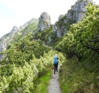 Legföhrenweg in Richtung Kuegrat und Landesgrenze LI/A, Gafleispitz und Kuegrat vor uns