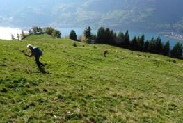Steiler Aufstieg über eine aussichtsreiche Alp