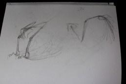 Pterosaur inspired wing