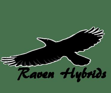 Raven Logo1