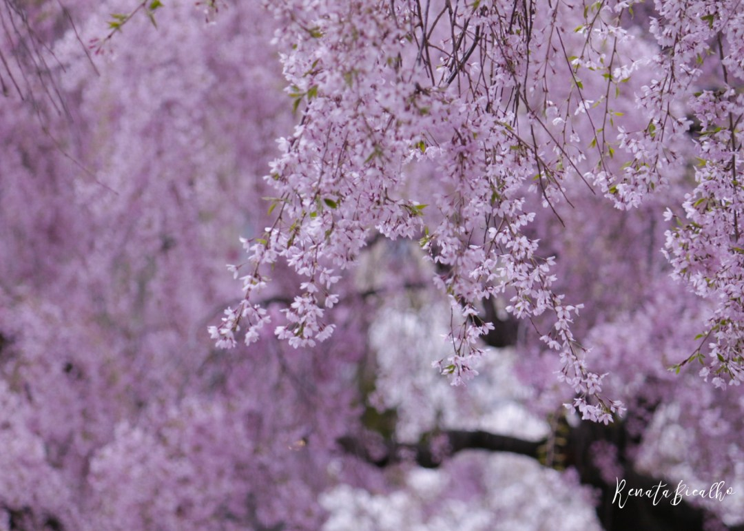 flores008