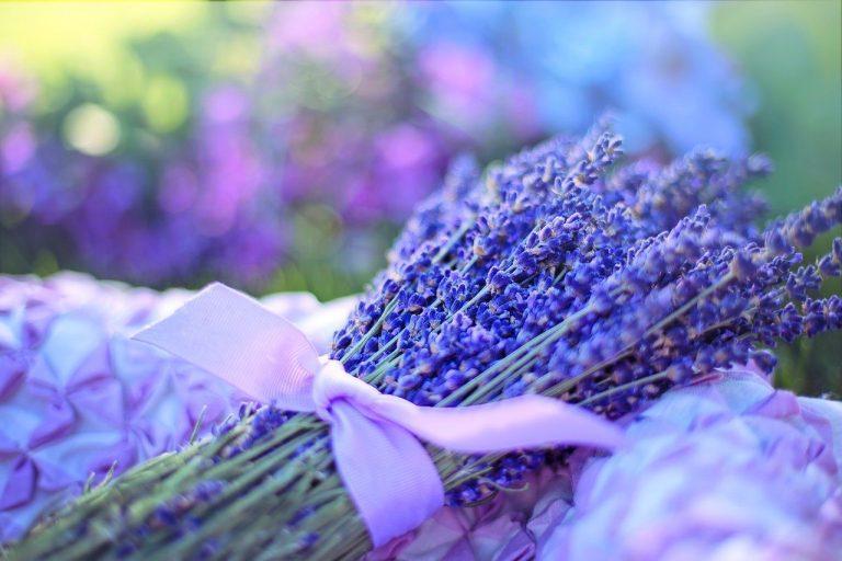 lavender, fresh, flowers