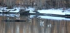 rf-canada-geese-sunset-feb