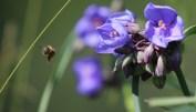 Bee Away-1