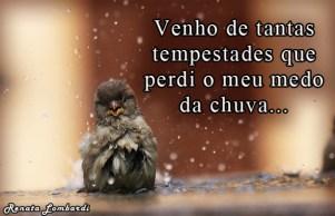 passaros_banho_chuva_17