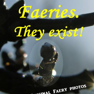 """Cover """"Faeries, They exist"""""""