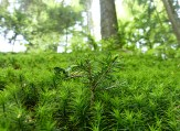 Frühling im Wald (11)